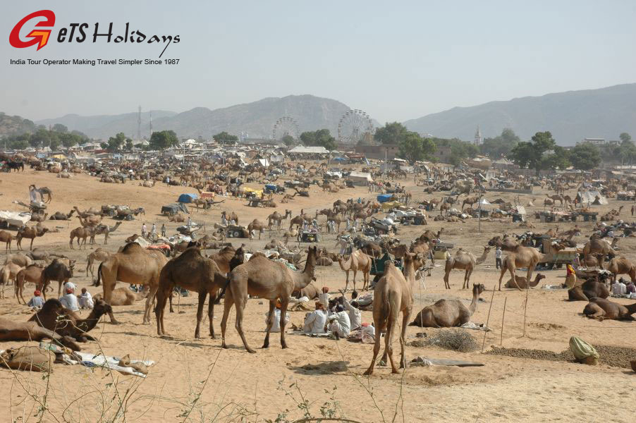 rajasthan-Pushkar-fair-tour