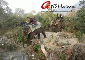 elephant-safari in jim corbett national park