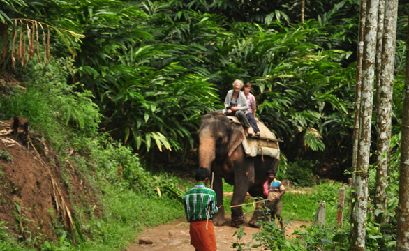 kerala tour packages, kerala travel, God's own country