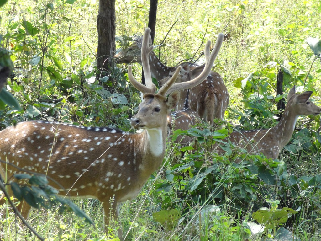 Bairamgarh WildLife Sanctuary