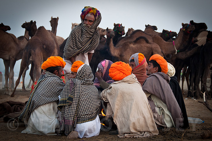 Pushkar Fair - 2016