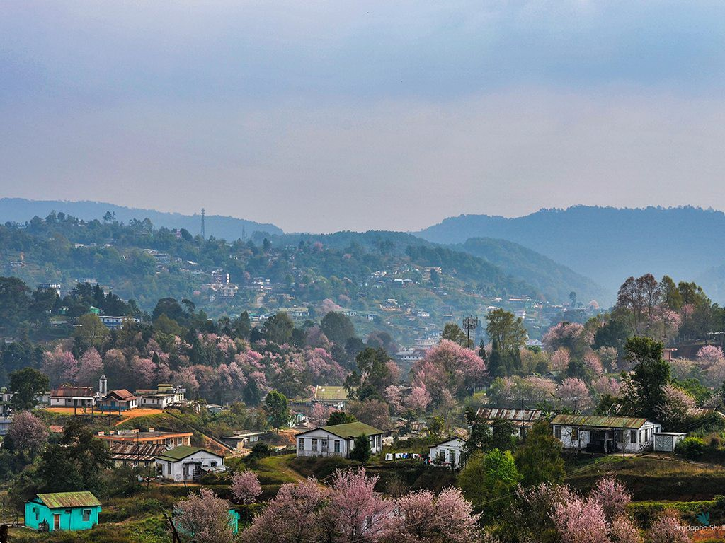 Cherry Blossom Shade around Shillong