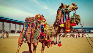 photography camel